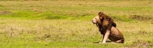 12 days safari