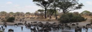 3 days Safari