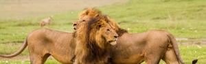 5 days safari