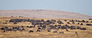 6 days tanzania safari