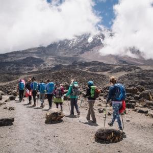 contact us for kilimanjaro