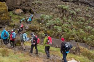 acclimatization kilimanjaro
