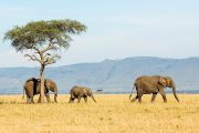 12 days safari and Kilimanjaro