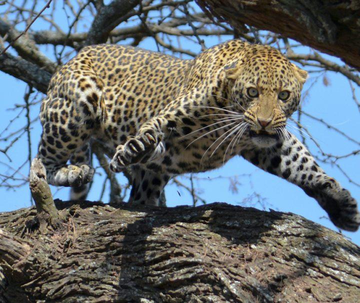 4 day safari Tanzania Serengeti Ngorongoro