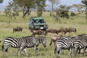 4 days serengeti ngorongoro game drives