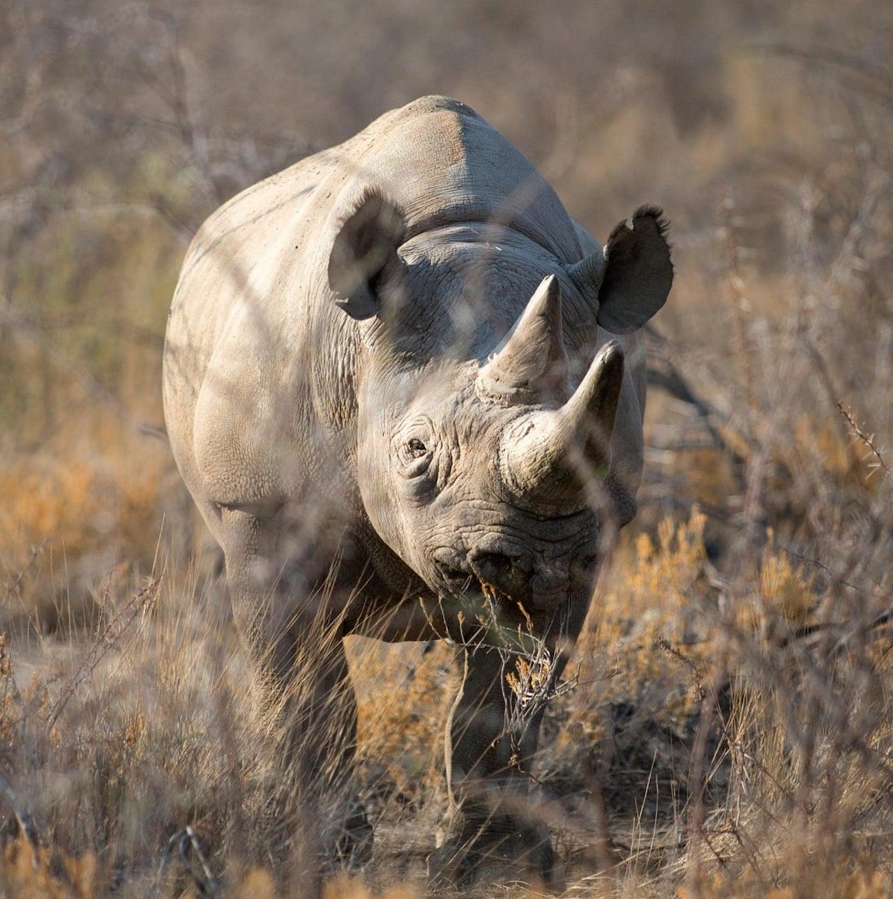 5 days safari Tanzania