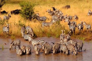 six days Tanzania safari lodge